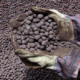 iron ore pellets Galerry
